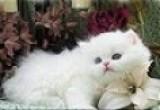 العاب القطة كيتي