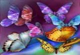 لعبة صيد الفراشات الملونة